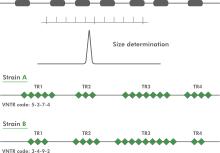 Multi locus VNTR analysis