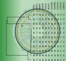 Whole-genome SNP analysis