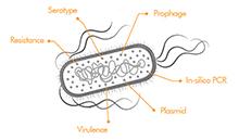 Functional genotyping