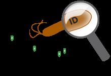 MALDI-TOF bacterial identification